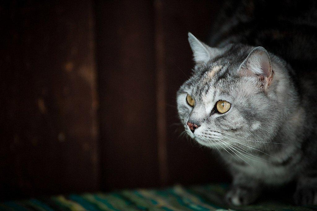 IMAGE: http://tonskulus.kuvat.fi/kuvat/Mammals/Tupu/tupula1.jpg/_medium.jpg